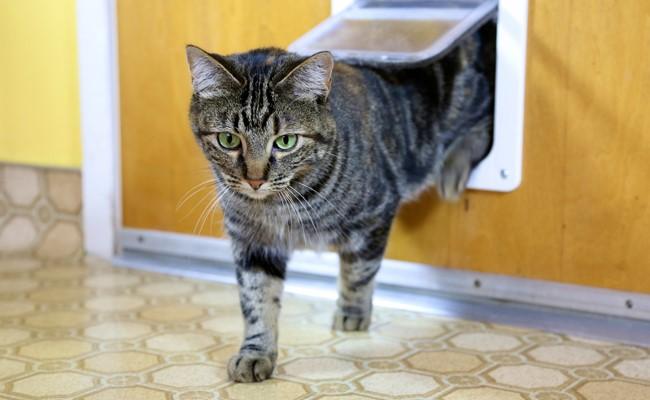 Cat walking through a pet door