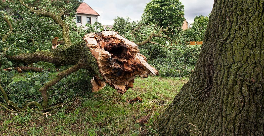 http://downed%20tree%20wind%20storm