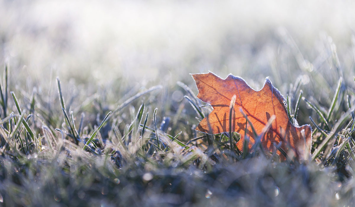 http://cold%20weather%20frost%20leaf%20winter%20fall