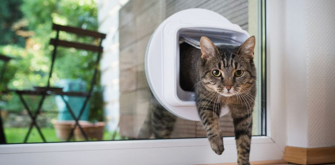 http://remodeling%20pet-friendly,%20keep%20your%20pet%20safe