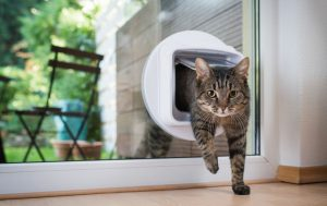 remodeling pet-friendly, keep your pet safe