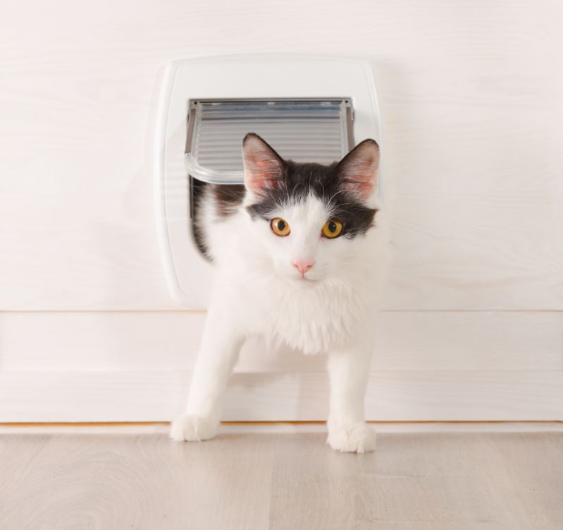 remodeling pet-kitty cat, friendly, keep your pet safe